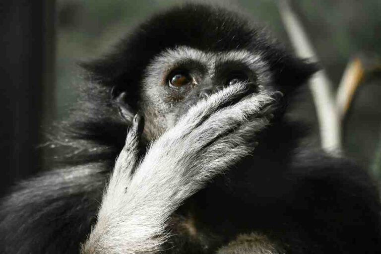 monkey consciousness